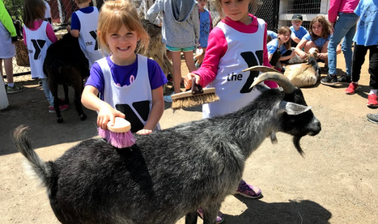 kids and goat